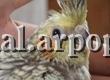 Развитие птенца: с момента вылупления до двух месяцев — фото