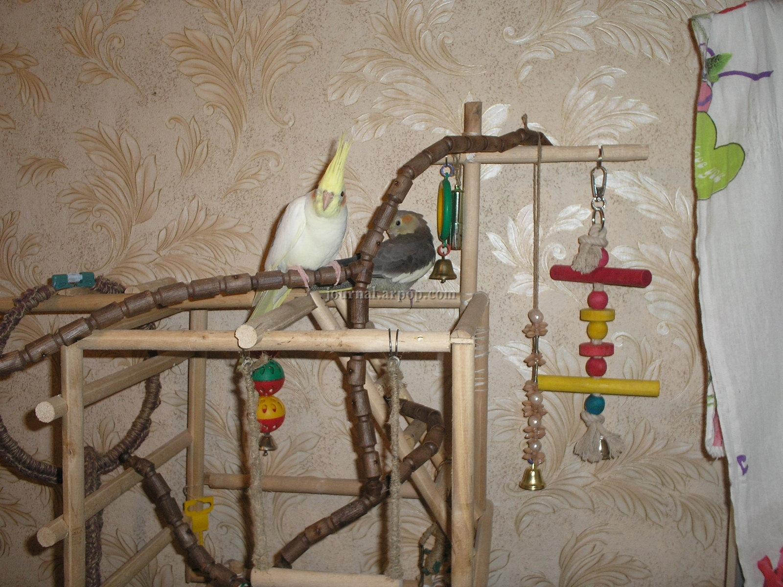 Насест для попугая своими руками 16