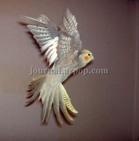 Фото птиц в полёте
