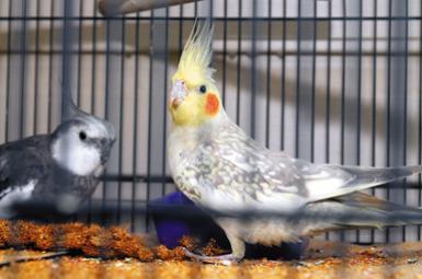 Семья нашла птицу после 3-летнего отсутствия