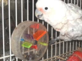 Попугаи в новостях