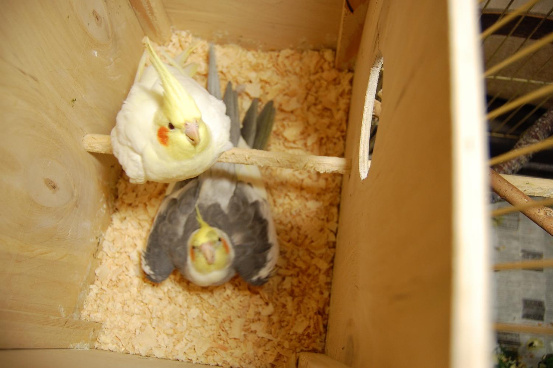 Начало гнездования