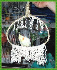 Самодельные кольца для птиц