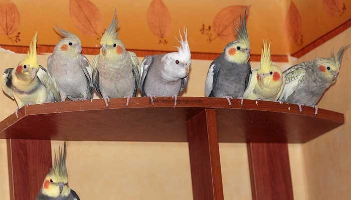 «Я всегда любила птиц…»