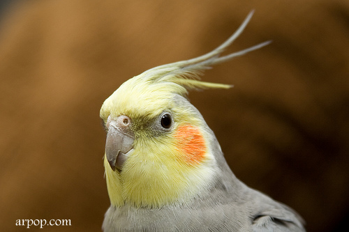 Фотографируем птиц правильно
