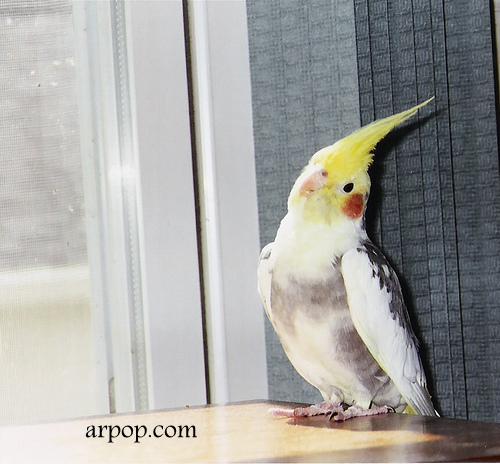 Попугай улетел