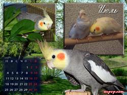 Календарь с кореллами 2011
