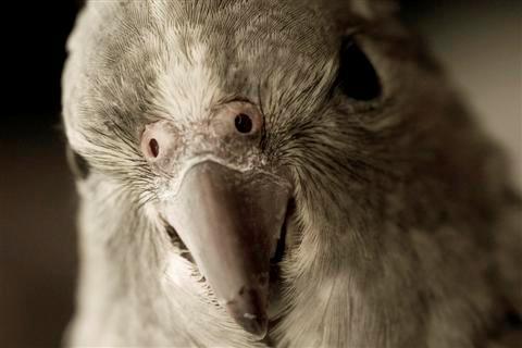 Как распознать попугаевладельца