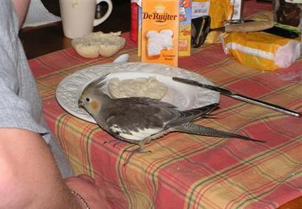 Еда с нашего стола