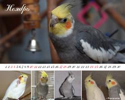 Календарь и обои с попугаями