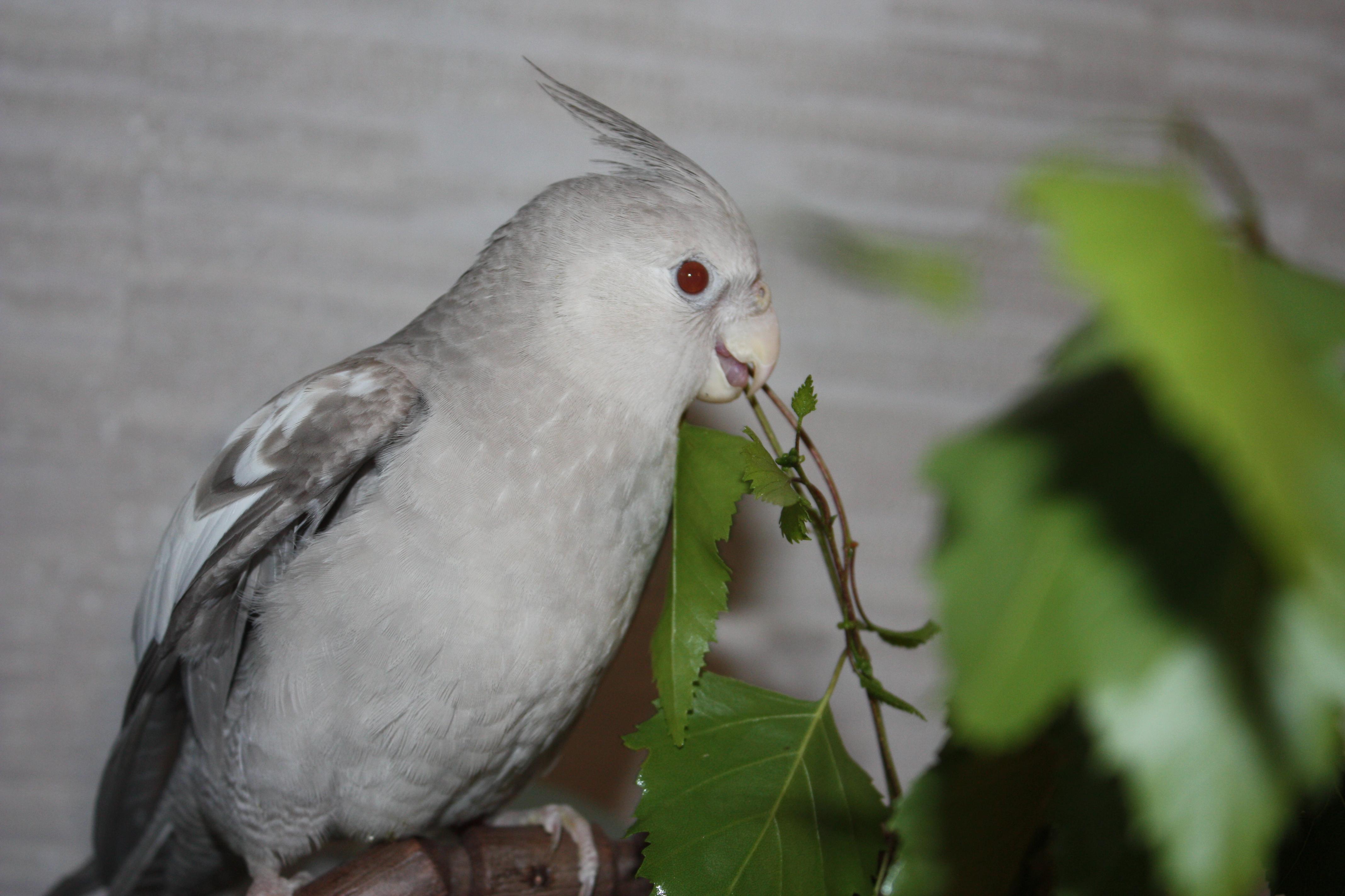 Чем кормить попугая — танины обязательный компонент рациона попугаев
